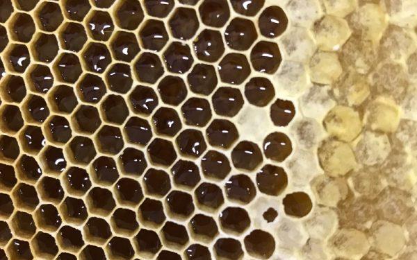高野養蜂場